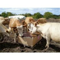 Ethical Farm Supplies - Salt Lick Cattle