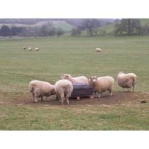 Ethical Farm Supplies -  Mineral Buckets - Organic Sheep Biomin Block