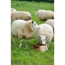 Ethical Farm Supplies - Molamins Mineral Buckets - Sheep Molamin