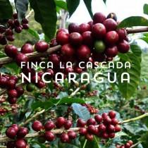Nicaragua - Finca La Cascada